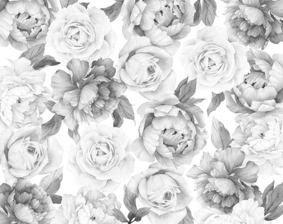 B&W Peony and Rose Wallpaper Rose wallpaper, Wallpaper