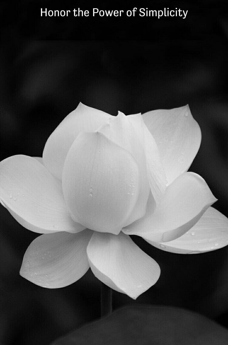 Pin By Andrea Linder On Pictures Pinterest Lotus Buddha And