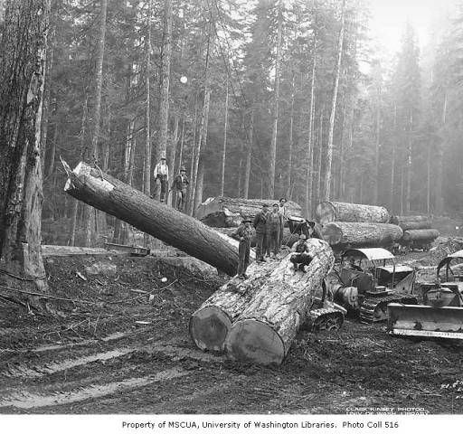 Loggers At Loading Site With Caterpillar Tractors And Arch Yarders, Schafer  Brothers Logging Company, Probably In Grays Harbor County, Ca. 1942 :: U2026