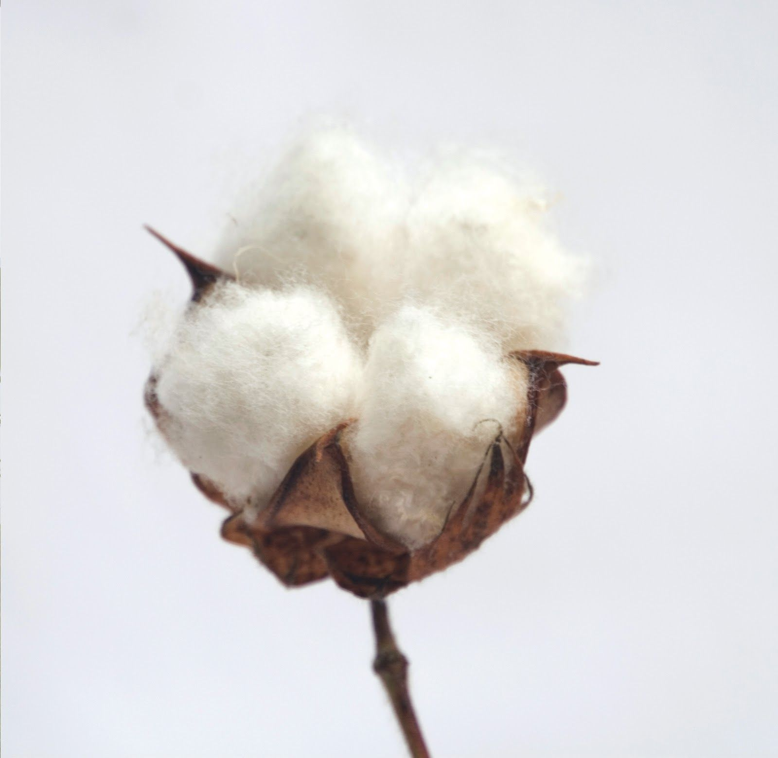 Paruthi: Background of Indian Cotton History   Eco Couture ...