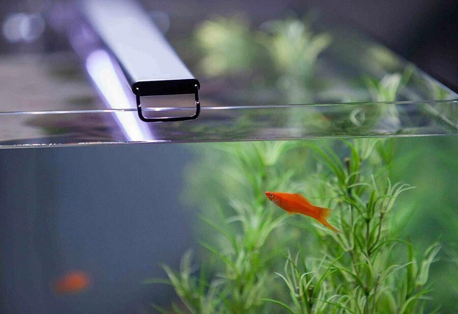Current Usa Satellite Freshwater Led Light For Aquarium Ebay Led Lights Fresh Water Aquarium Lighting