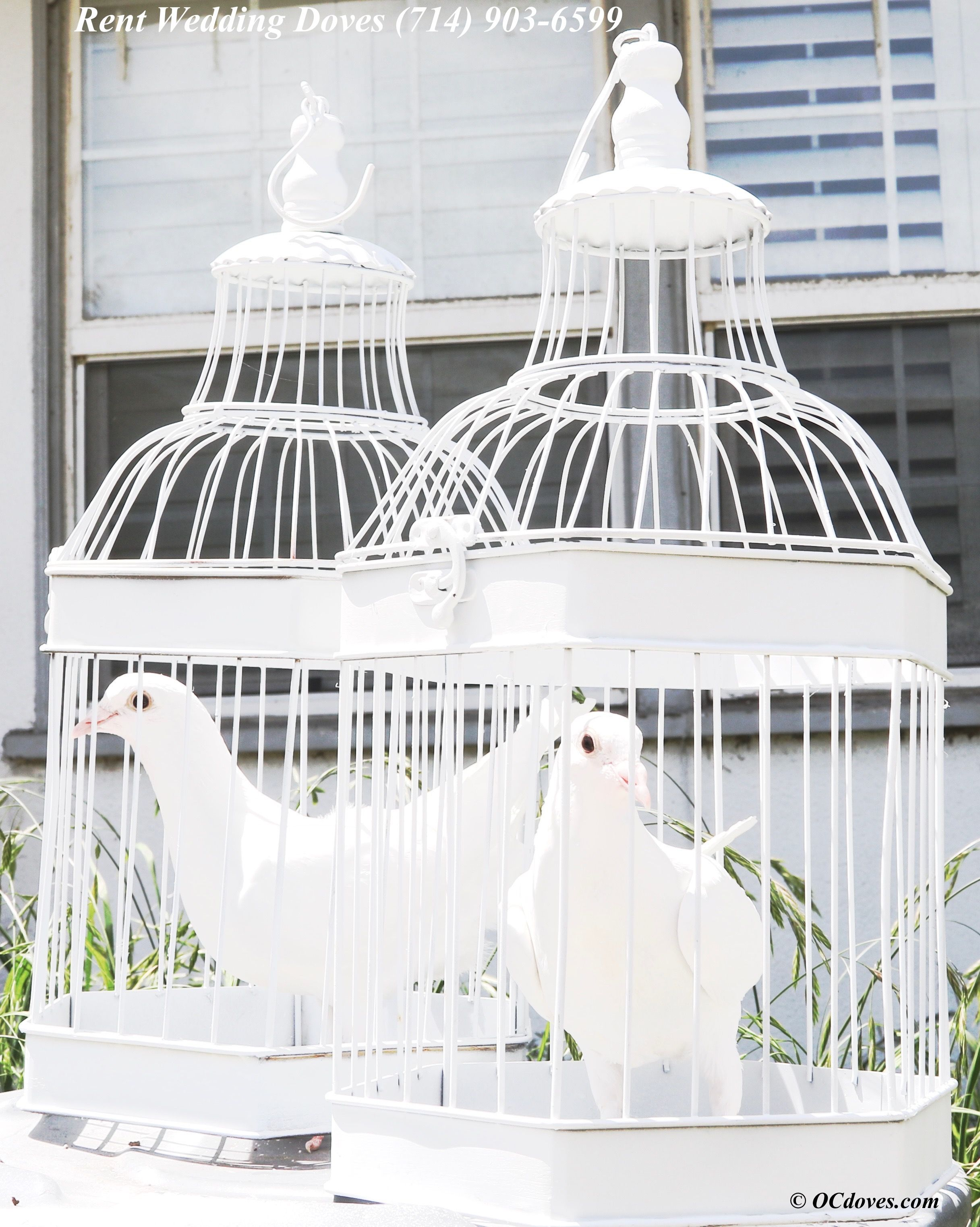 https://OCdoves.com Newport Coast White Dove Release - Laguna Hills, Huntington Beach, Anaheim, Yorba Linda, Beverly Hills, Bel Air, Hollywood, Glendale, Burbank, Pasadena, Palos Verdes, Long Beach, Seal Beach, Corna Del Mar, San Diego, Riverside, Texas, Dallas, Houston, San Francisco, New York Wedding Rental Services l (7l4) 903-6599