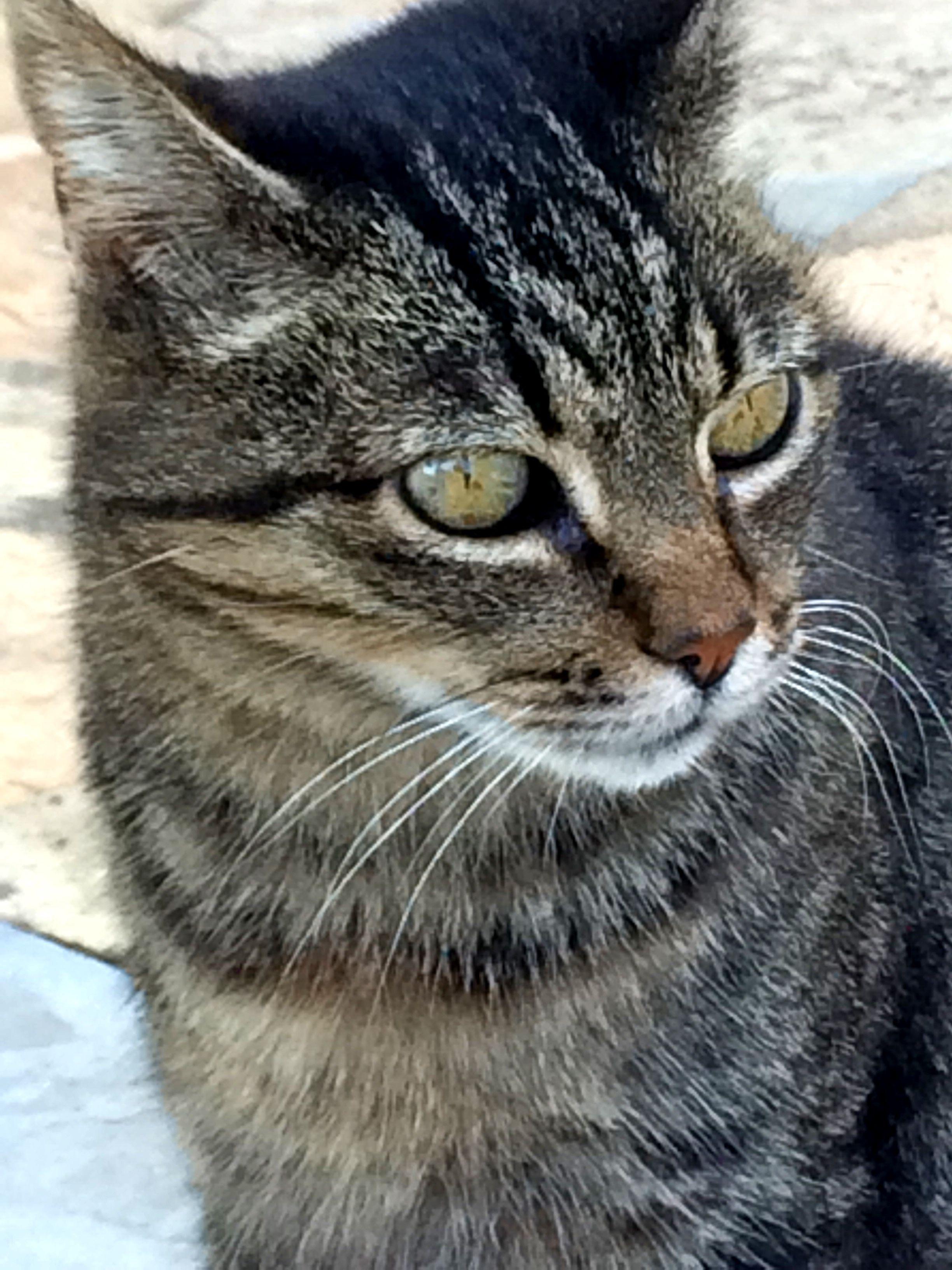 Pin van Josi Campur op Cats in Spain