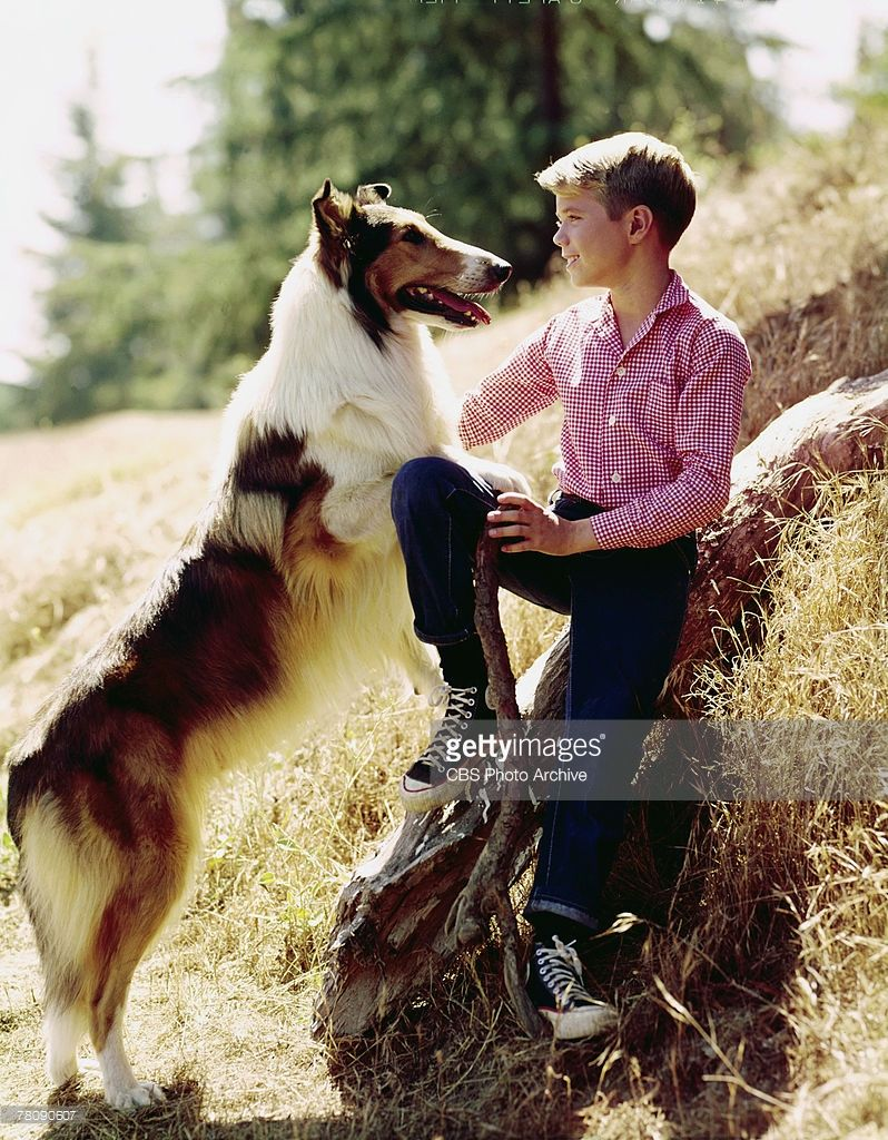 Animal actor
