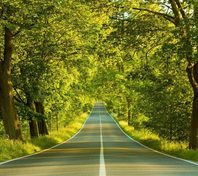 16 Nature Road Wallpaper Hd 2048x1365 Nature Forest Road Wallpaper And Background 5 Days Of A Tree Road Wallpaper Nature Photography Fall Photography Nature