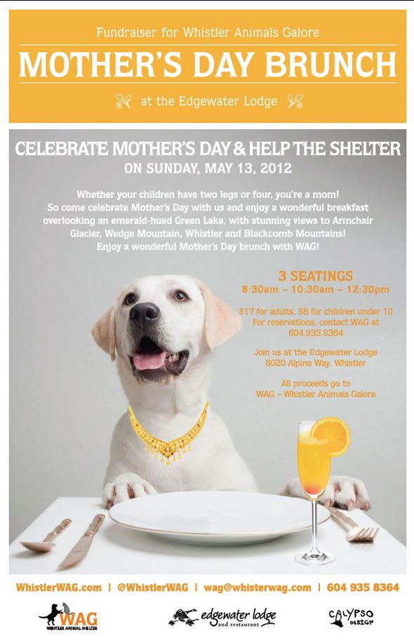 Whistler Animals Galore Wag Mother S Day Fundraiser Brunch At