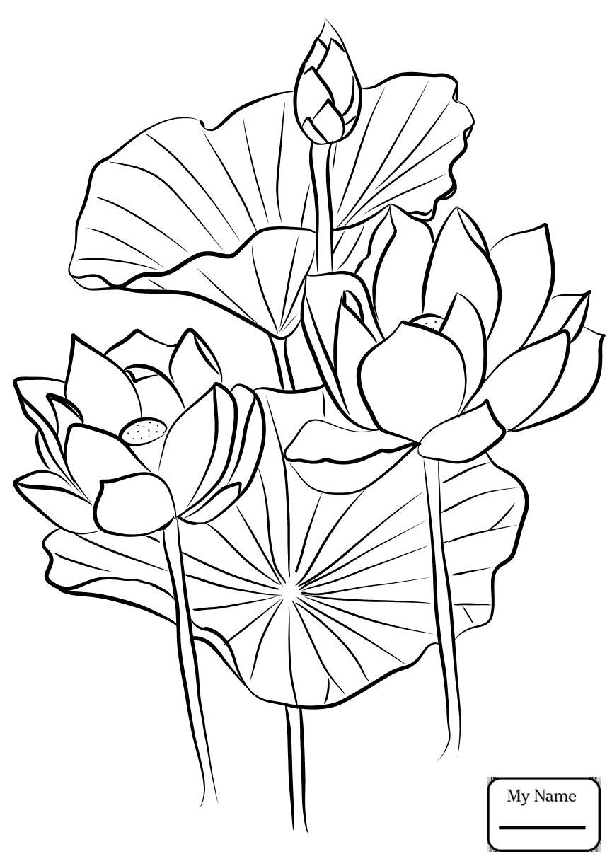 Lotus Flower Coloring Page in 2020