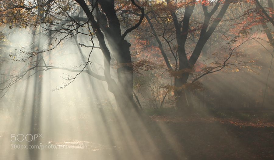 light - Pinned by Mak Khalaf Thank you for your visit Landscapes 가을단풍도솔천빛내림아침안개 by kimmd35141