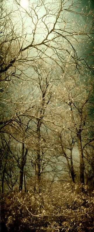 Pin By Abigail Flemming On Nomad Land Enchanted Forest Beautiful Tree Beautiful Nature