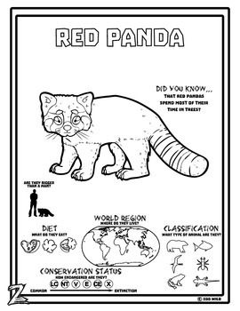 A Red Panda Coloring Page With Images Panda Activities Red