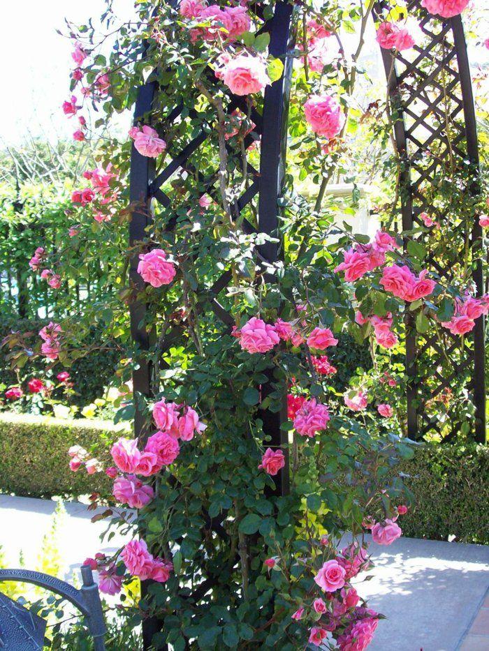 Rose Garden Ideas david austin roses true old english garden roses most smell incredible with strong perfume Rose Arch Climbing Rose Garden Ideas Climbing Roses Varieties 2