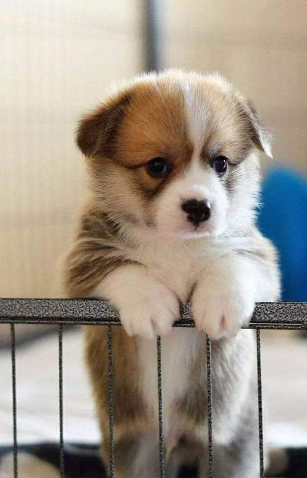 Pin By Grandma Joan On Cute Animals With Images Really Cute Puppies Cute Baby Animals Cute Animals