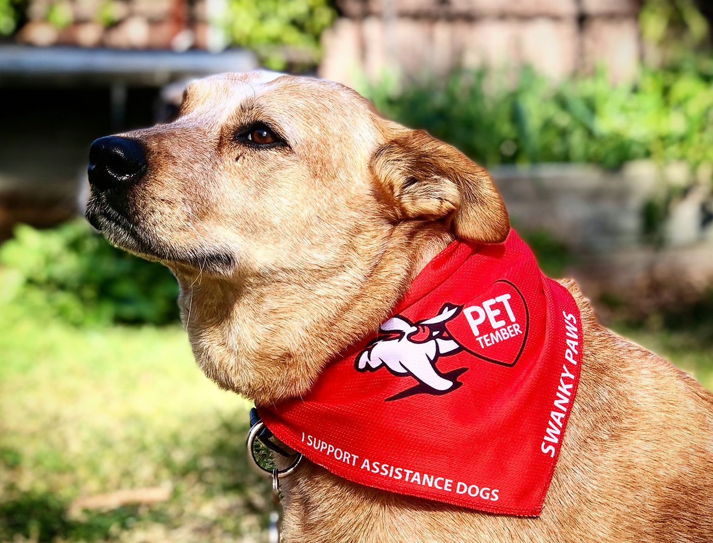 Petember Dressed Up Paws For A Cause September 1 To 30 In 2020 Dogs And Kids Assistance Dog Dogs Day Out