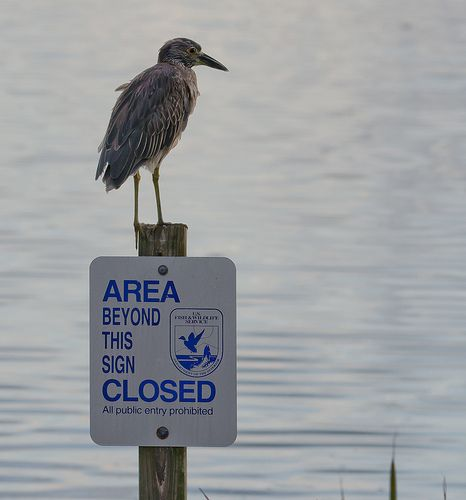 Bird on Sign 4