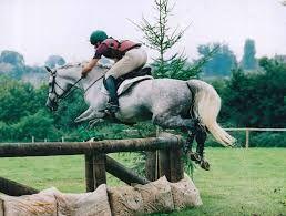 Resultado de imagem para cavalos alter real