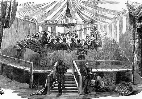 An engraving of the iguanodon dinner party that appeared in the London Illustrated News, 7 January 1854. Reproduced with permission from The Crystal Palace Dinosaurs by Steve McCarthy & Mick Gilbert. #historyofdinosaurs