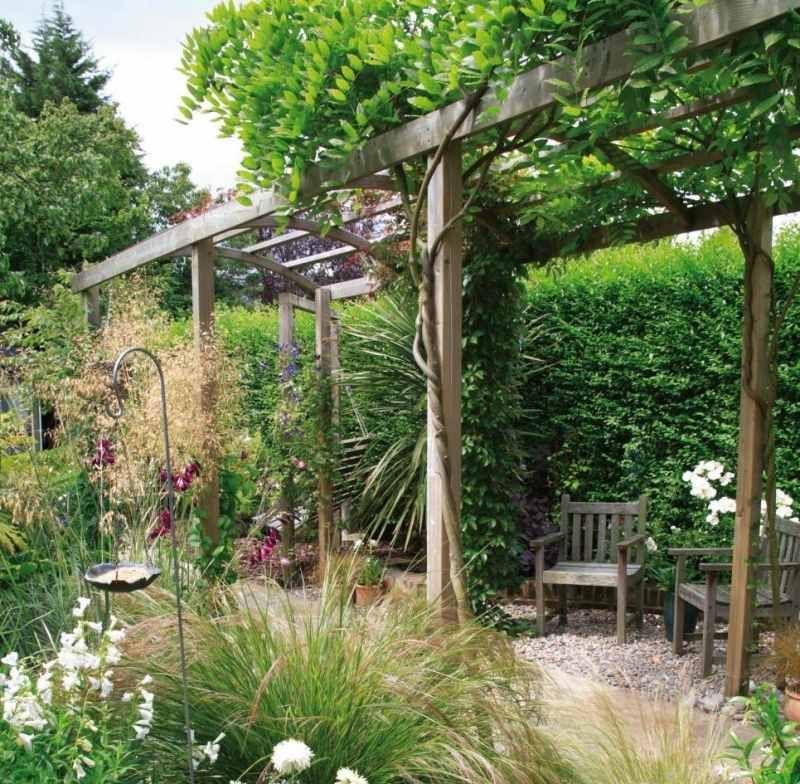 Pergola Bepflanzen Welche Kletterpflanzen Eignen Sich Kletterpflanzen Pflanzenrankgitter Pergola Schatten
