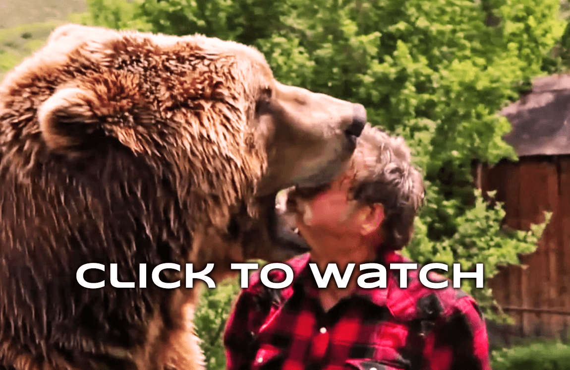 JiPoshy: SCARY VIDEO OF MAN TRUSTING GRIZZLY BEAR | Addictive ...