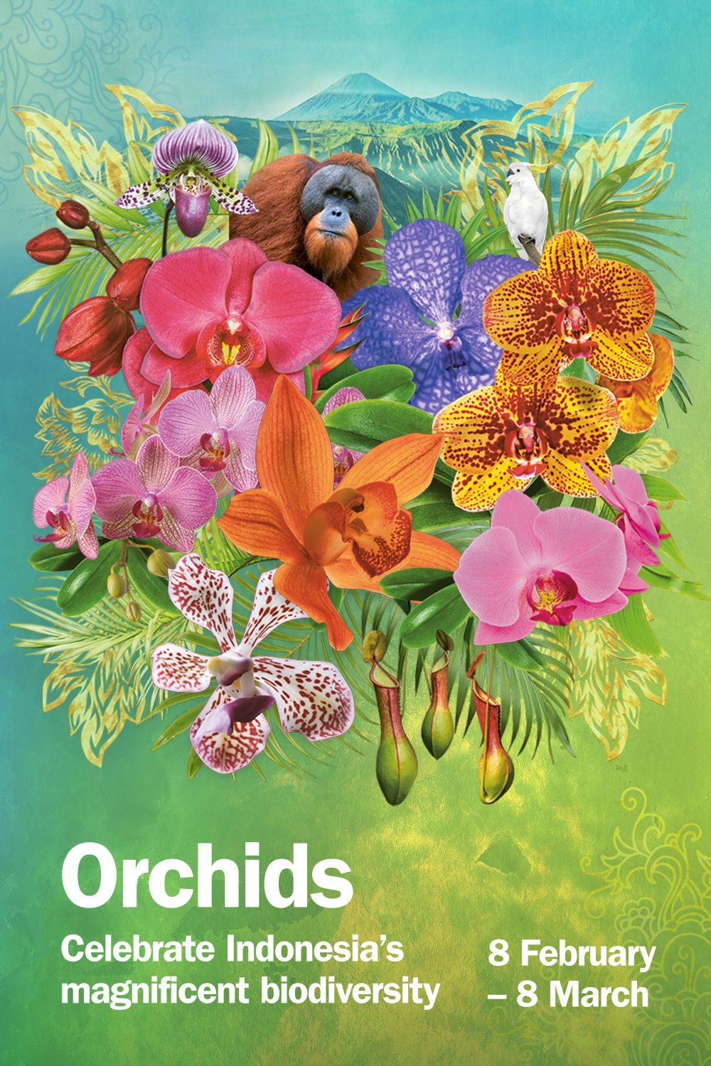 Escape the winter weather at Orchids in 2020 Orchids
