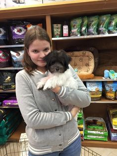 Silver Nickel Puppies For Sale New Jersey Englewood Ridgefield