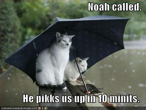 Image result for Funny Rain