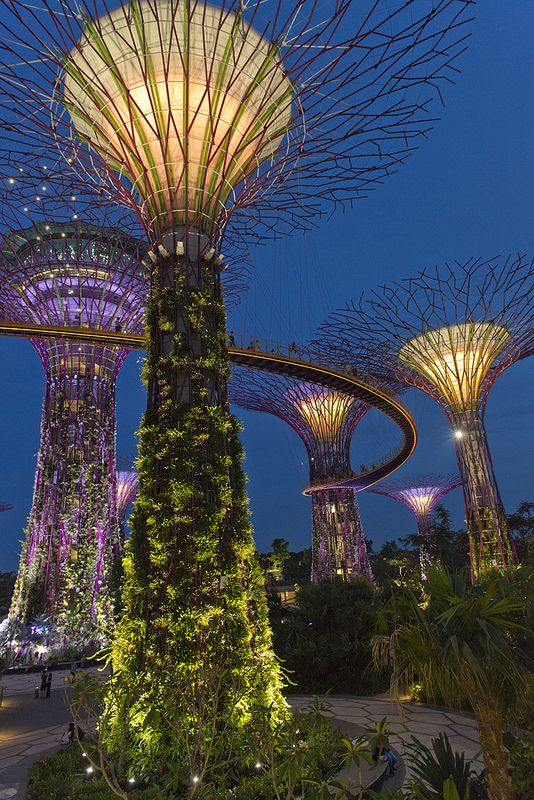 Supertrees Gardens By The Bay Gardens By The Bay Singapore Garden Singapore Travel