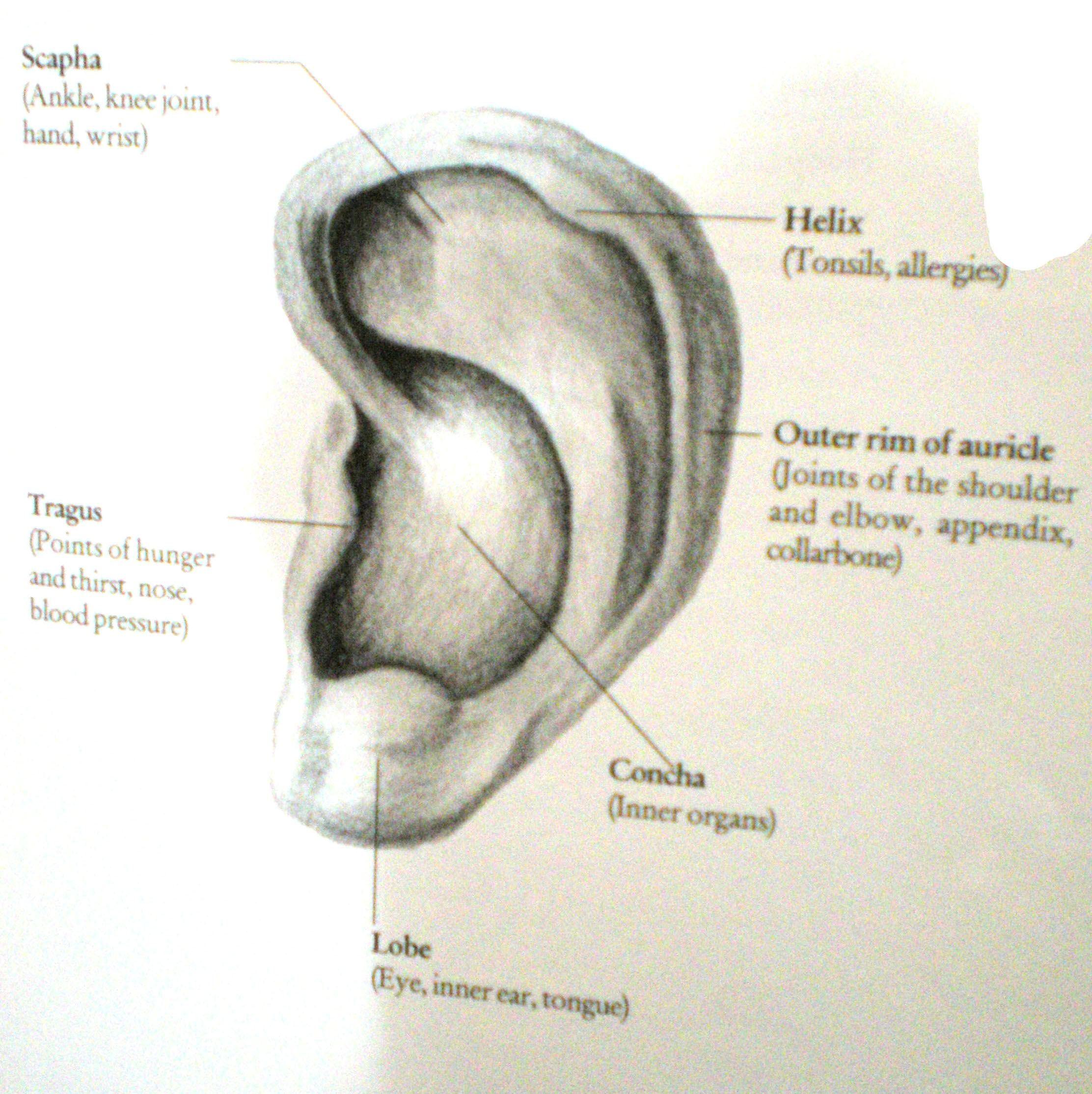 Piercing Antique Indian Jewellery Piercings Ear Piercings Body Art