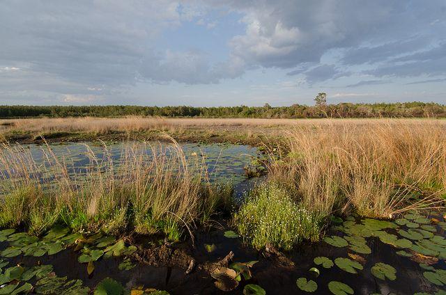 Grassy Pond by Carlton Ward Photography, via Flickr