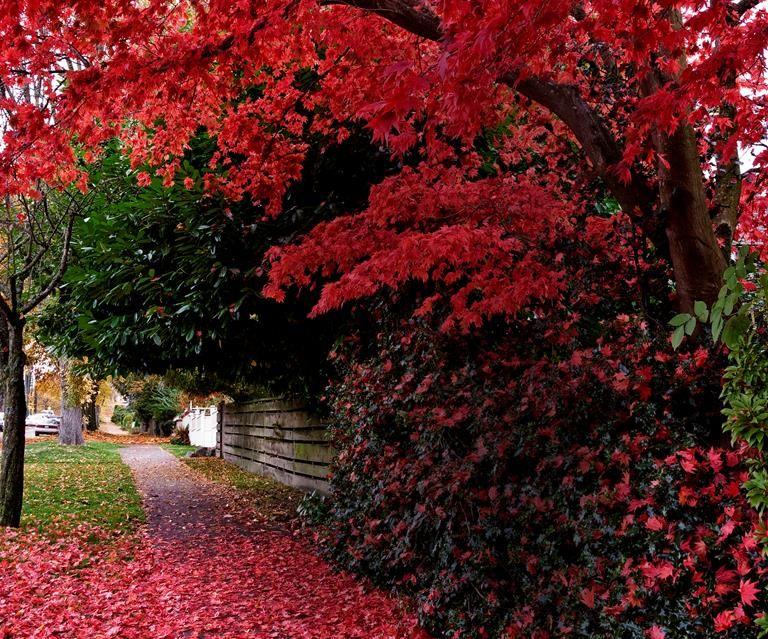 40c460e80c9fcfb2ced3bff3d39002d0 - Australian Native Trees For Small Gardens