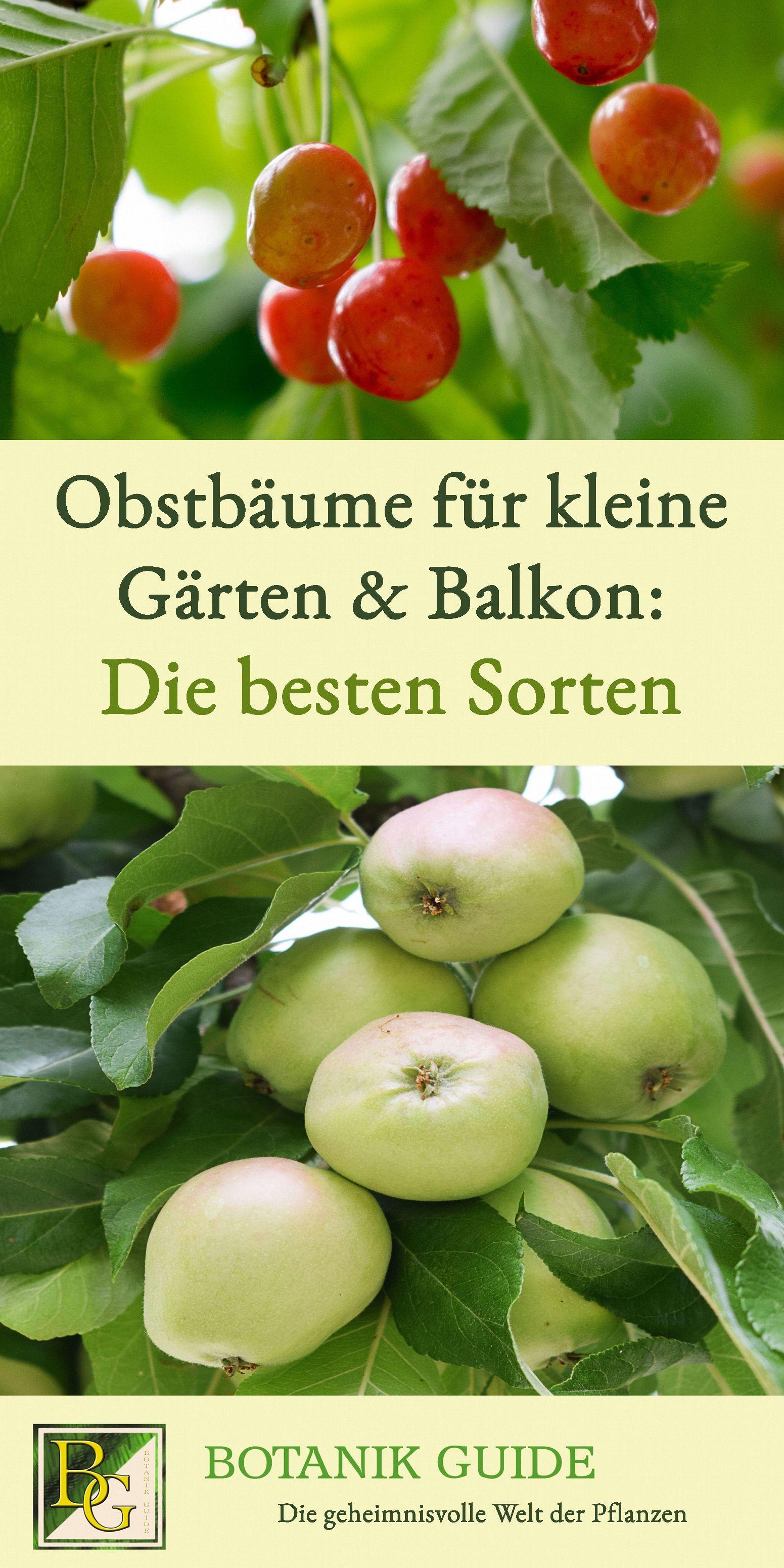 Bewährte Obstbäume für  kleine Gärten & Terrasse #kleinegärten