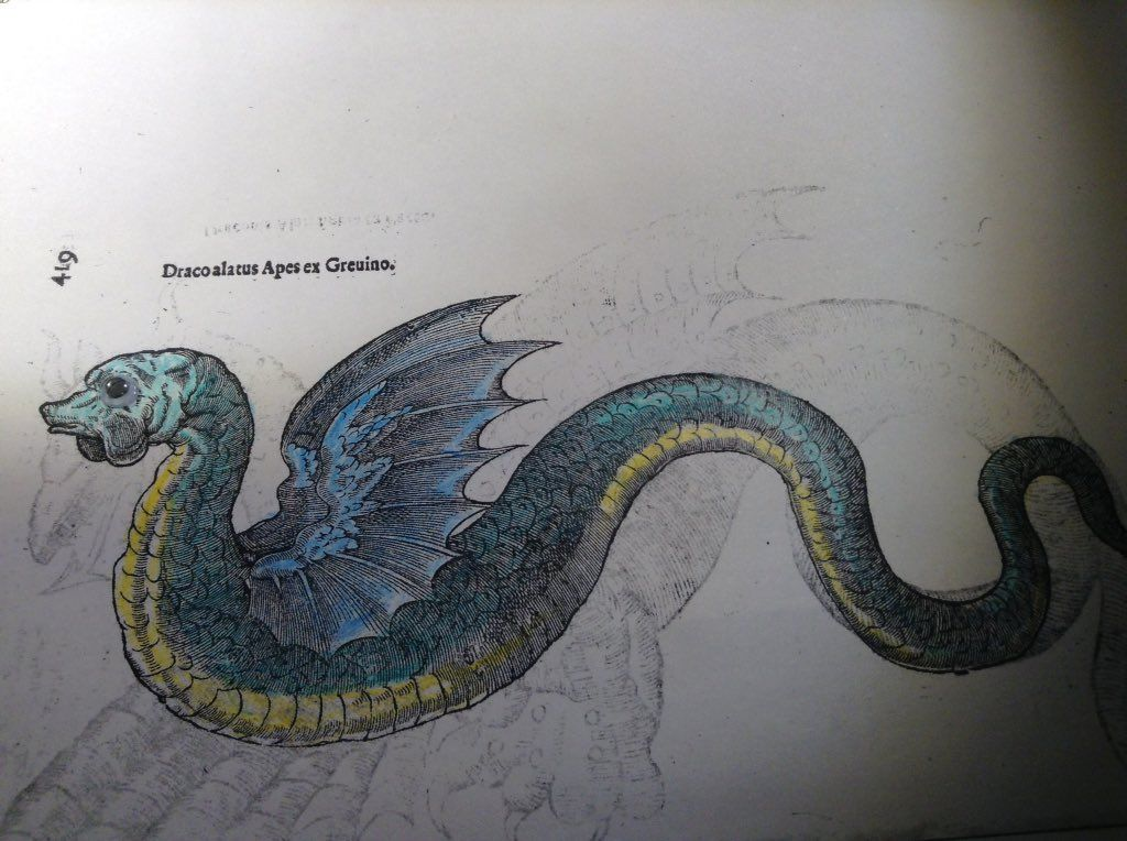 """Rob Cruickshank on Twitter: """"#ColorOurCollections is better with googly eyes. cc @BioDivLibrary https://t.co/7zrgB6eXoN"""""""