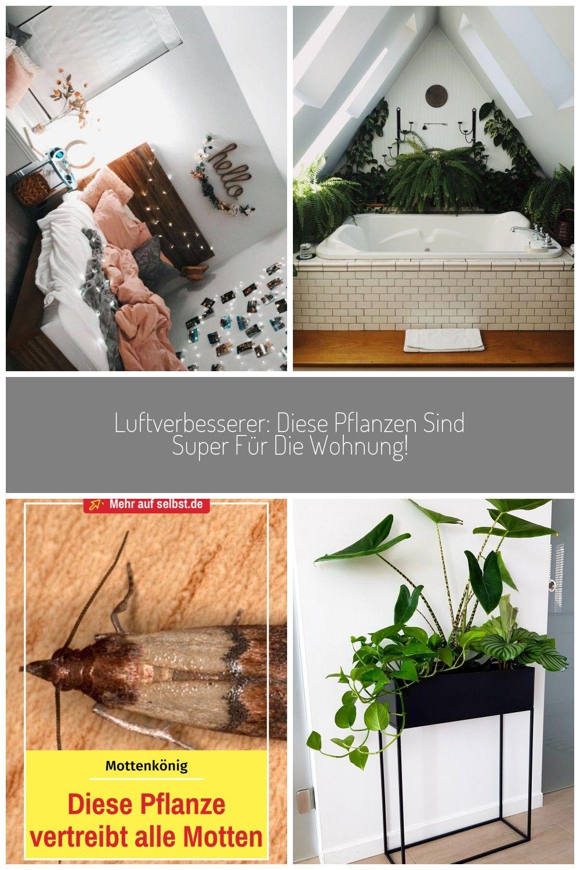 Gardening Ist Ein Trend Nicht Nur Drauen Vor Allem Indoor Ist Es Grner Den Je Diese Pflanzen Verschnern Deine Eigenen Vie In 2020 Pflanzen Pflanzen Dekor Kleidermotten