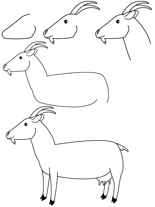 Drawing Goat How To Draw In 2019 Pinterest Drawings Easy