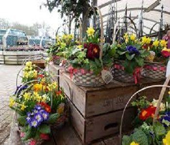Chessington Garden Centre Plants Garden Furniture Restaurant Garden Center Beautiful Outdoor Spaces Garden Essentials