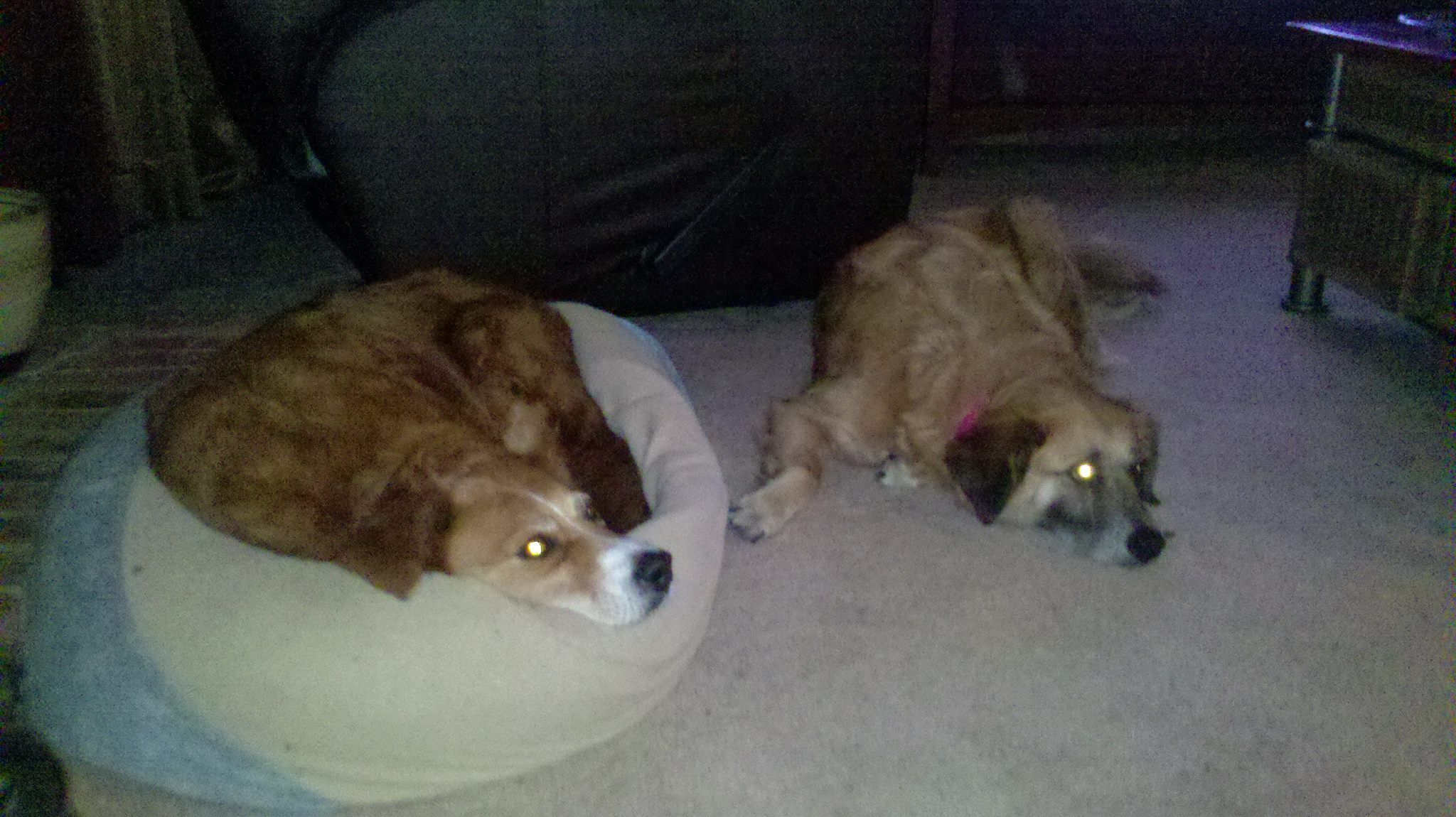 2 Tornado Dogs Need A Home Tuscaloosa Taylorville Area My Heart