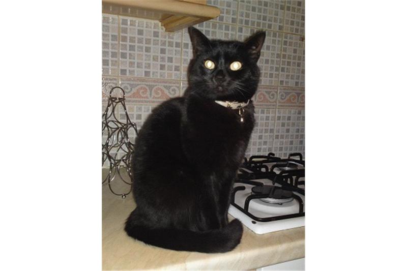 RAMBI Ready for Adoption London cats