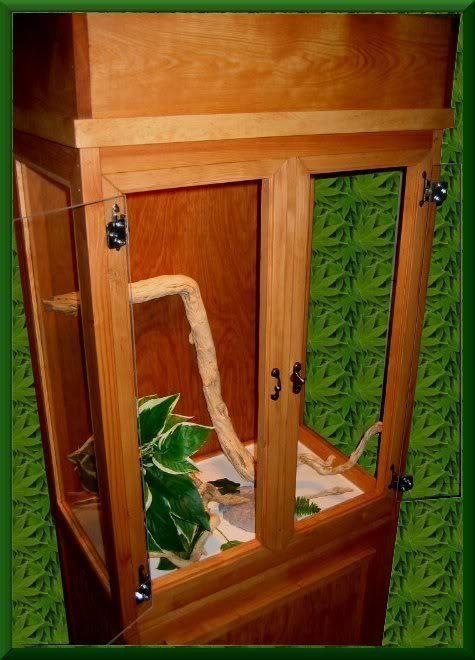 Make Own Reptile Cage Habitat Reptile Cage And Reptiles