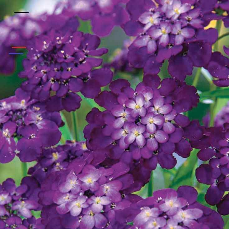 Names Of Purple Flowers For Wedding: A Comprehensive Overview On Home Decoration In 2020