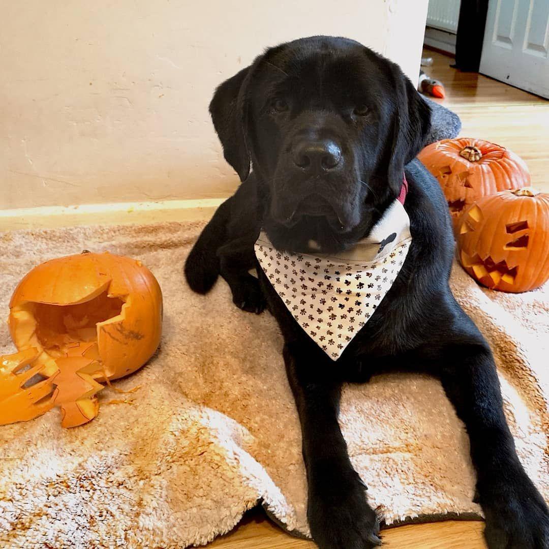 get 3D Labrador stikers Atopic dermatitis, Dermatitis