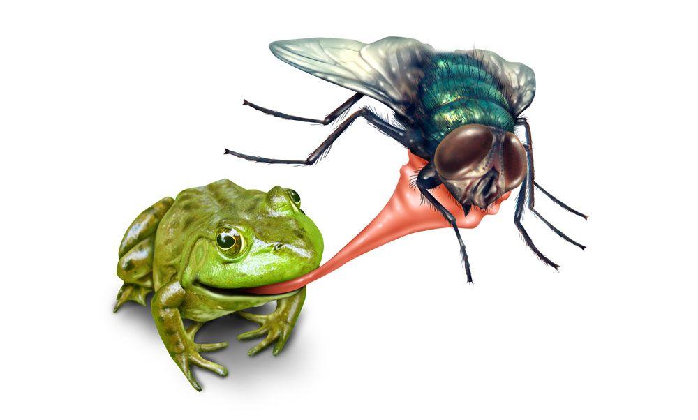 открыт картинка ловить мух виды фауны представлены