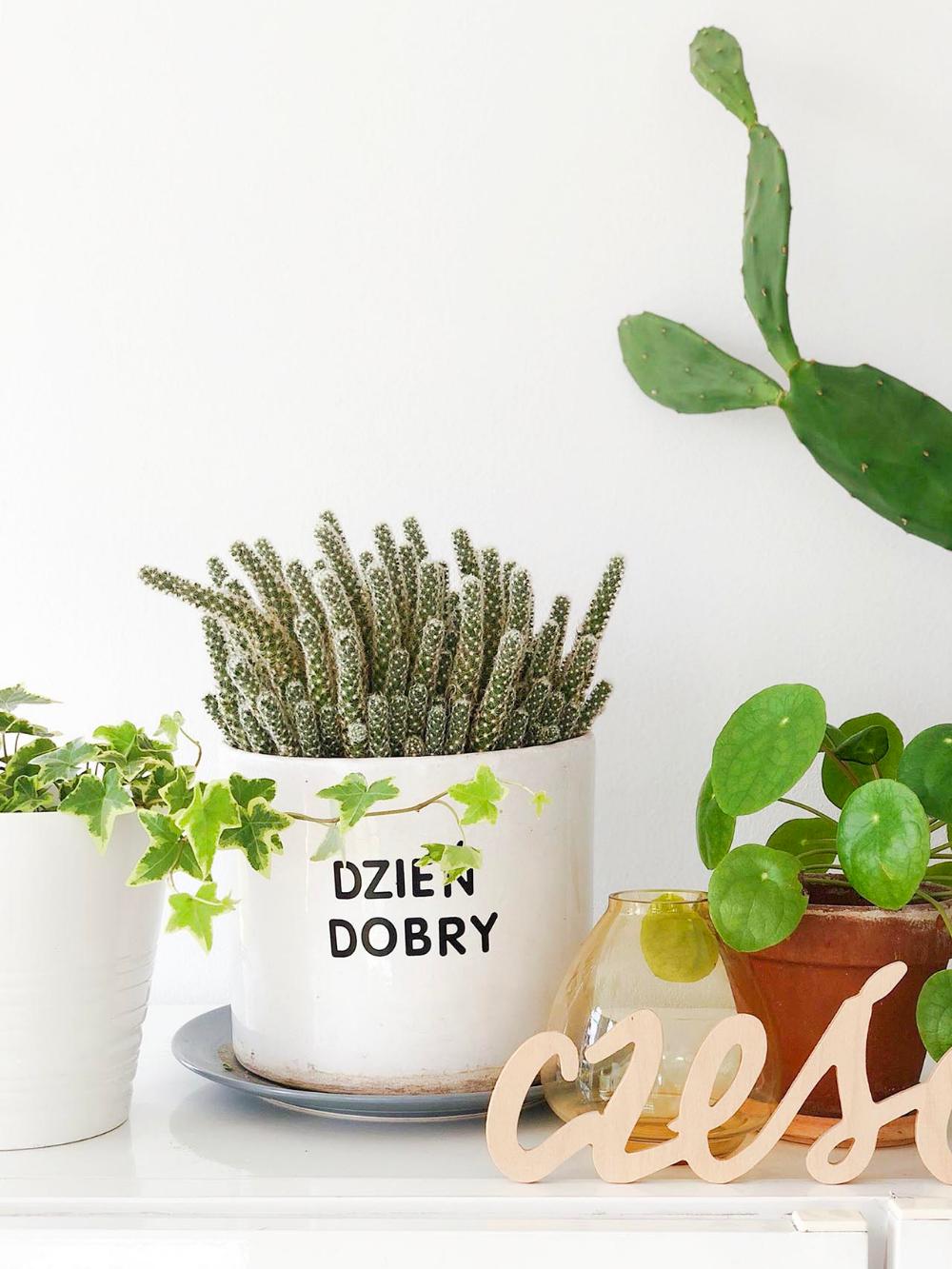 Kwiaty Doniczkowe W Moim Domu Cz 2 Basia Szmydt Blog Planter Pots Planters Living Room