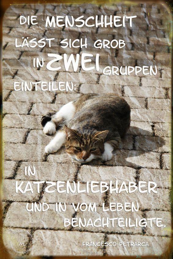 Mikrokosmos Spruch der Woche 191 cat diy funny photography tattoo bebes bonitos dibujos diy graciosos ideas tatuajes tiernos