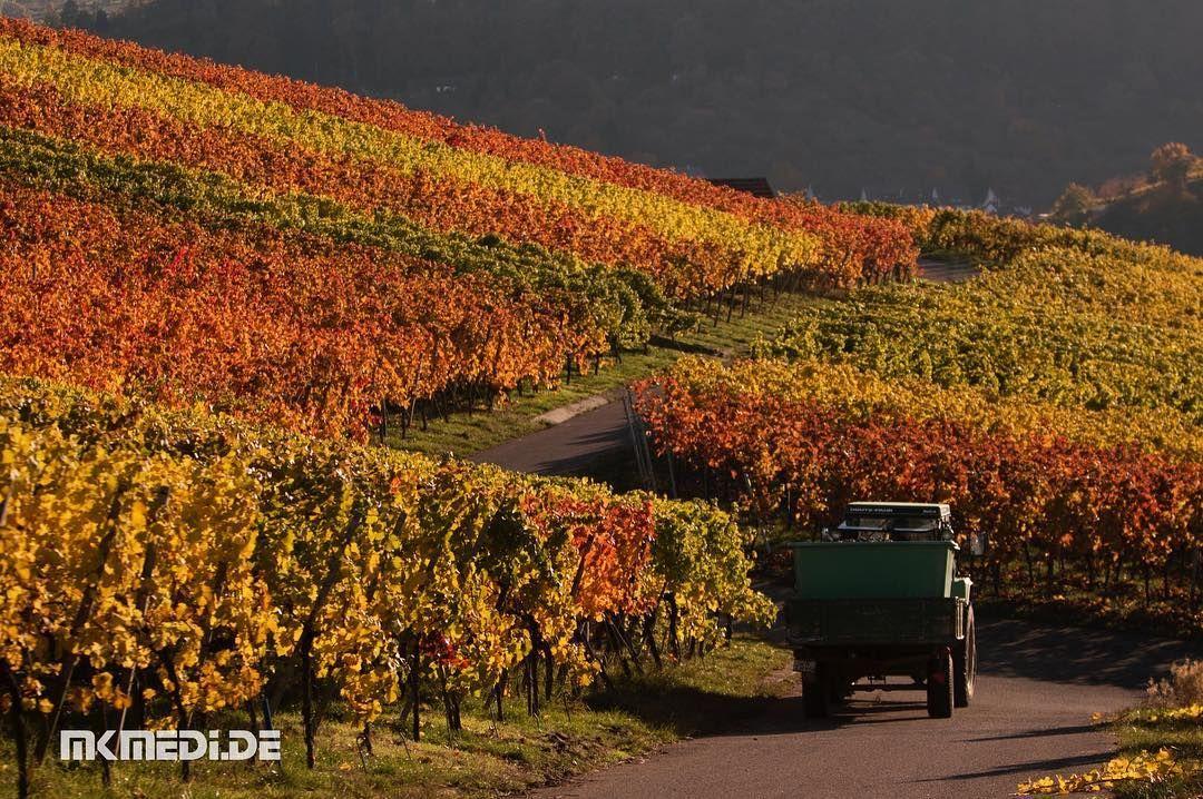 Day | Bild des Tages 06.11.2016 | www.mkmedi.de #mkmedi #herbst #autumn #fall #wein #vine #winegrower #winemaker #winzer  #remstal #badenwuerttemberg #germany #deutschland  #instagood #photography #photo #art #photographer #exposure #composition #focus #capture #moment  #365picture #365DailyPicture #pictureoftheday #bilddestages #landscape  @deinstuttgart @baden.wuerttemberg @visitbawu @geheimtippstuttgart @stuttgart.places @0711stgtcty @stuttgartpics0711 @ig_stuttgart @vinummagazin