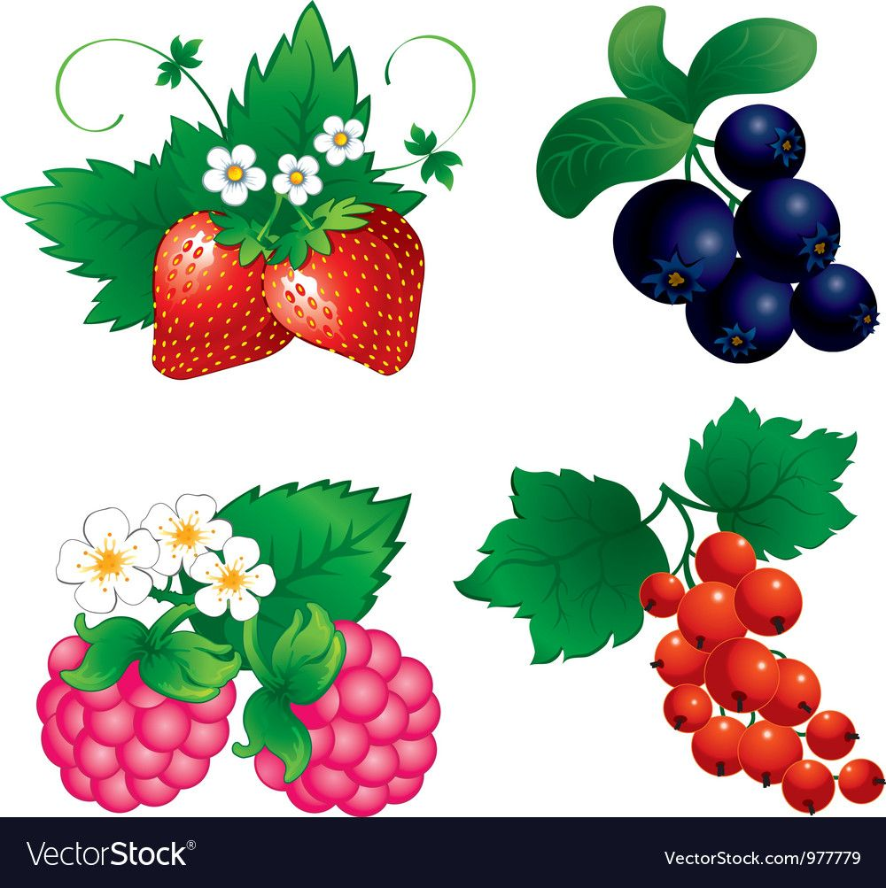 Set of berry. Download a Free Preview or High Quality