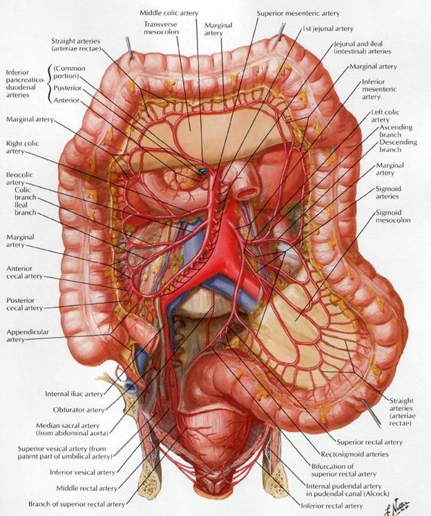 Pin de Silvia Prada en Ecografia | Pinterest | Anatomía, Medicina y ...