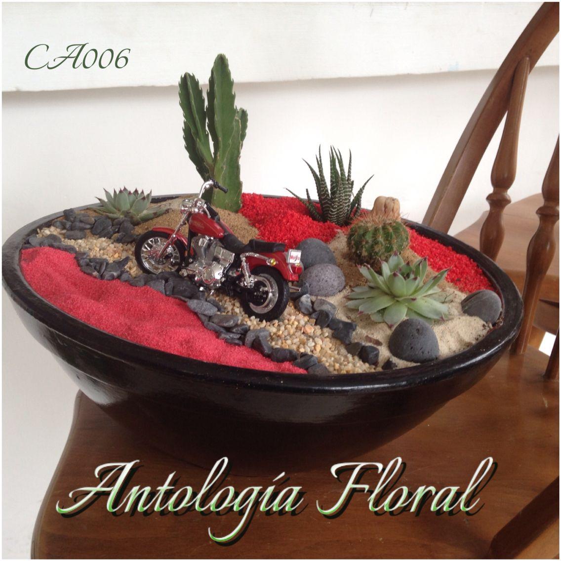 Arreglo de cactus y suculentas en maceta de barro tonos for Macetas de barro pequenas