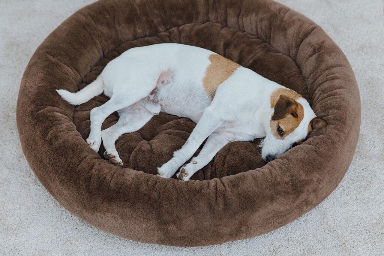 Snuggle Silktouch In 2020 Kuscheln Snuggles Hunde Bett