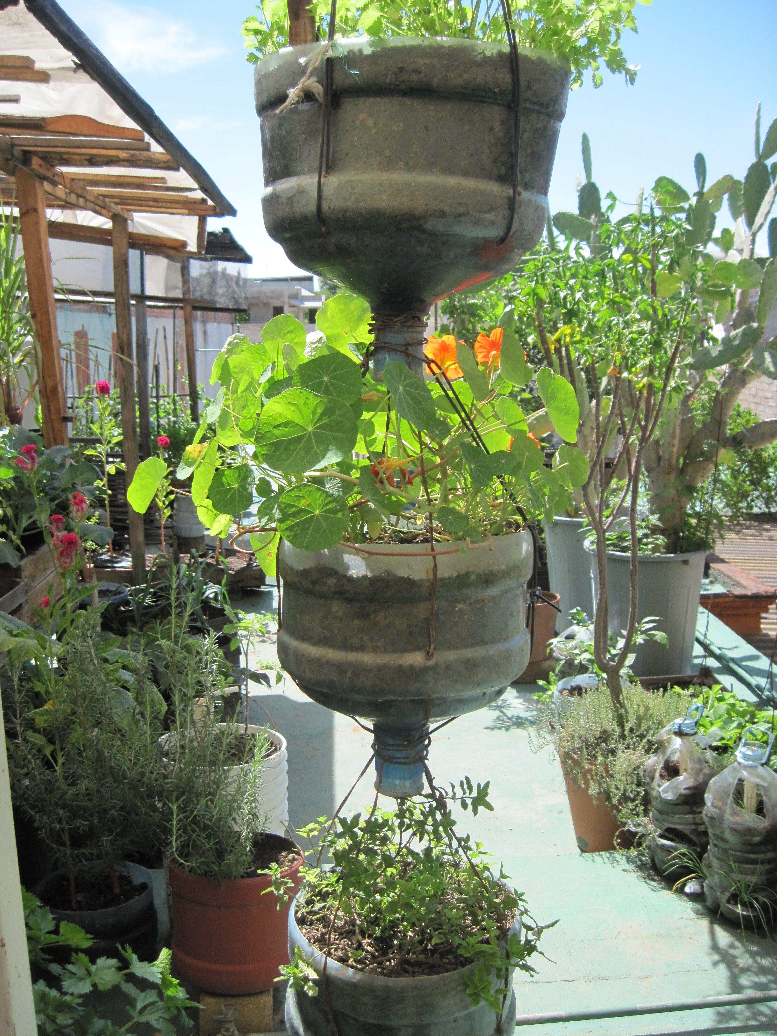 Image detail for plants like these re purposed for Garden design using plastic bottles