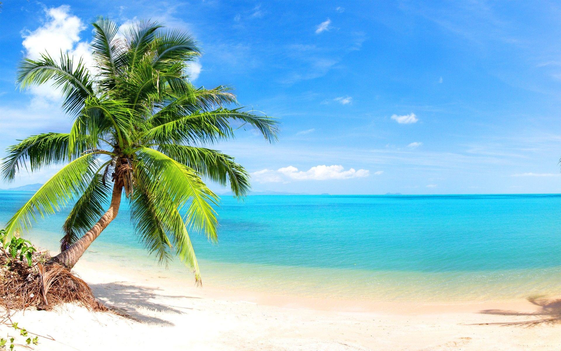 Download Tropical Beaches With Palm Trees S Wallpapers
