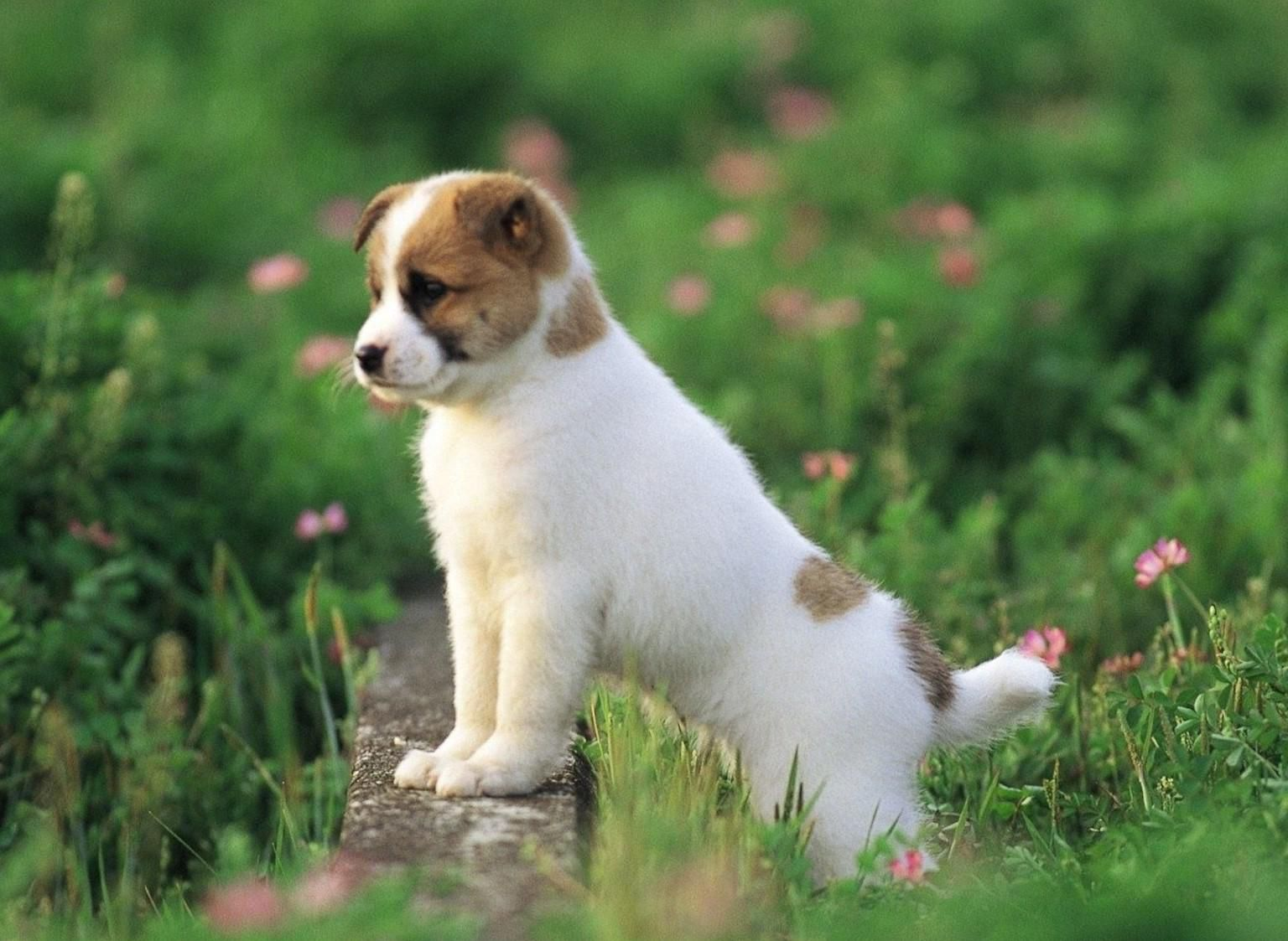 Dogs Have A Way Of Finding People Who Need Them And Filling An Emptiness They Didnt Know How They Had Https Ift Tt Pretty Dogs Cute Puppy Wallpaper Baby Dogs